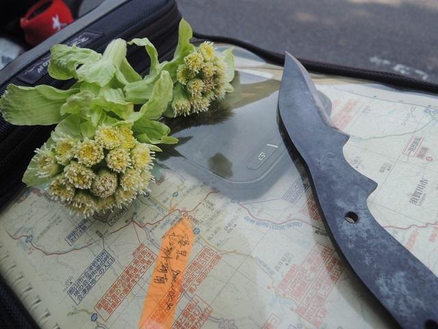 春の味覚と手製のナイフ 旅の道しるべ.jpg
