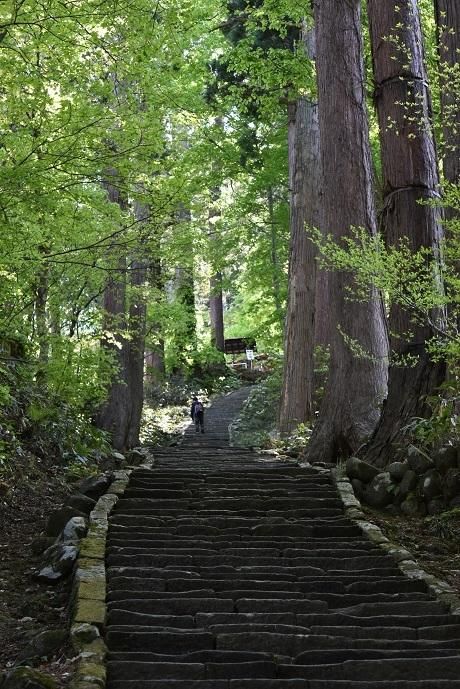 羽黒山の石段2446段 約2キロ.jpg